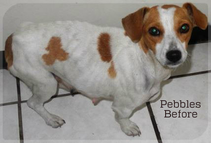 Adopted   Save-a-Pet, Animal Shelter, Rescue, Rehabilitation
