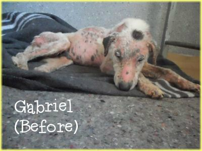 Gabriel-Before