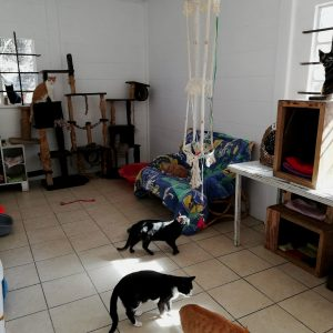 cattery_dec2018